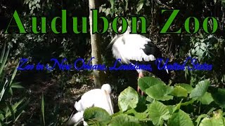 Visit Audubon Zoo, Zoo in New Orleans, Louisiana, United States