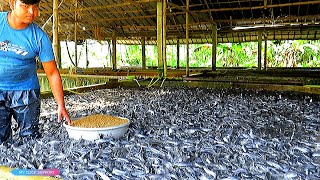 Download Usaha Budidaya Ikan Lele Profesional | Catfish Seeds Faming Business