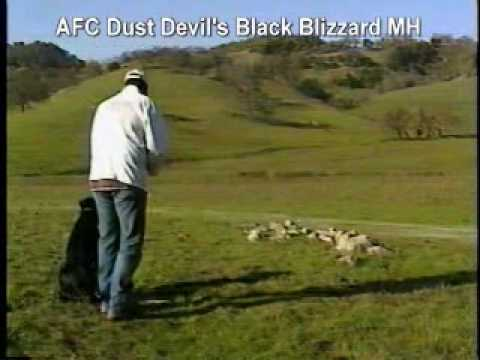 AFCDustDevilsBlackBlizzardMH-Blinds.wmv