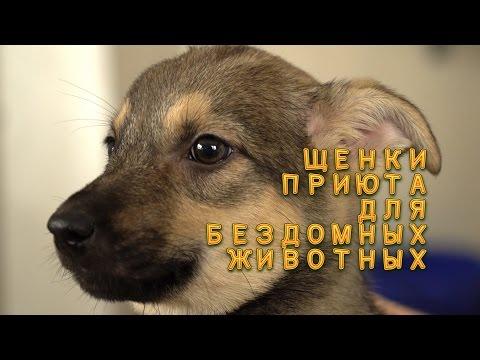 Вопрос: Почему в Беларуси много бездомных щенков?
