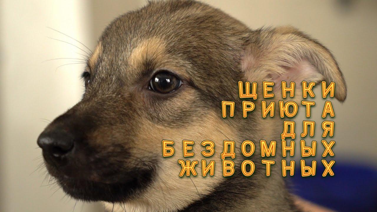 Щенки хаски- ДЕВОЧКА РОДИЛАСЬ 17 СЕНТЯБРЯ 2016 г. Купить щенка .