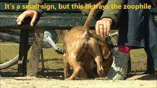 Repeat youtube video A Girl and her Dog - Mujeres que juegan con los Perros - حب الحيوانات