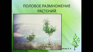 Половое размножение растений