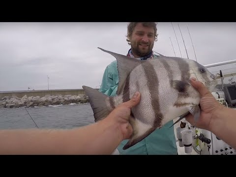 HOW TO CATCH SPADEFISH TIPS And TUTORIAL