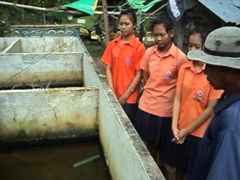 เรื่องการเลี้ยงปลาดุกในบ่ปูน