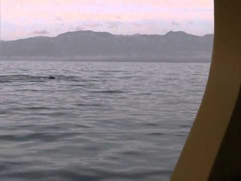 Port Simpson elders whale watching excursion