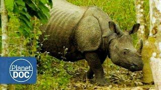 Documentales Completos en Español. El Rinoceronte Indio | Tras las Huellas del Unicornio