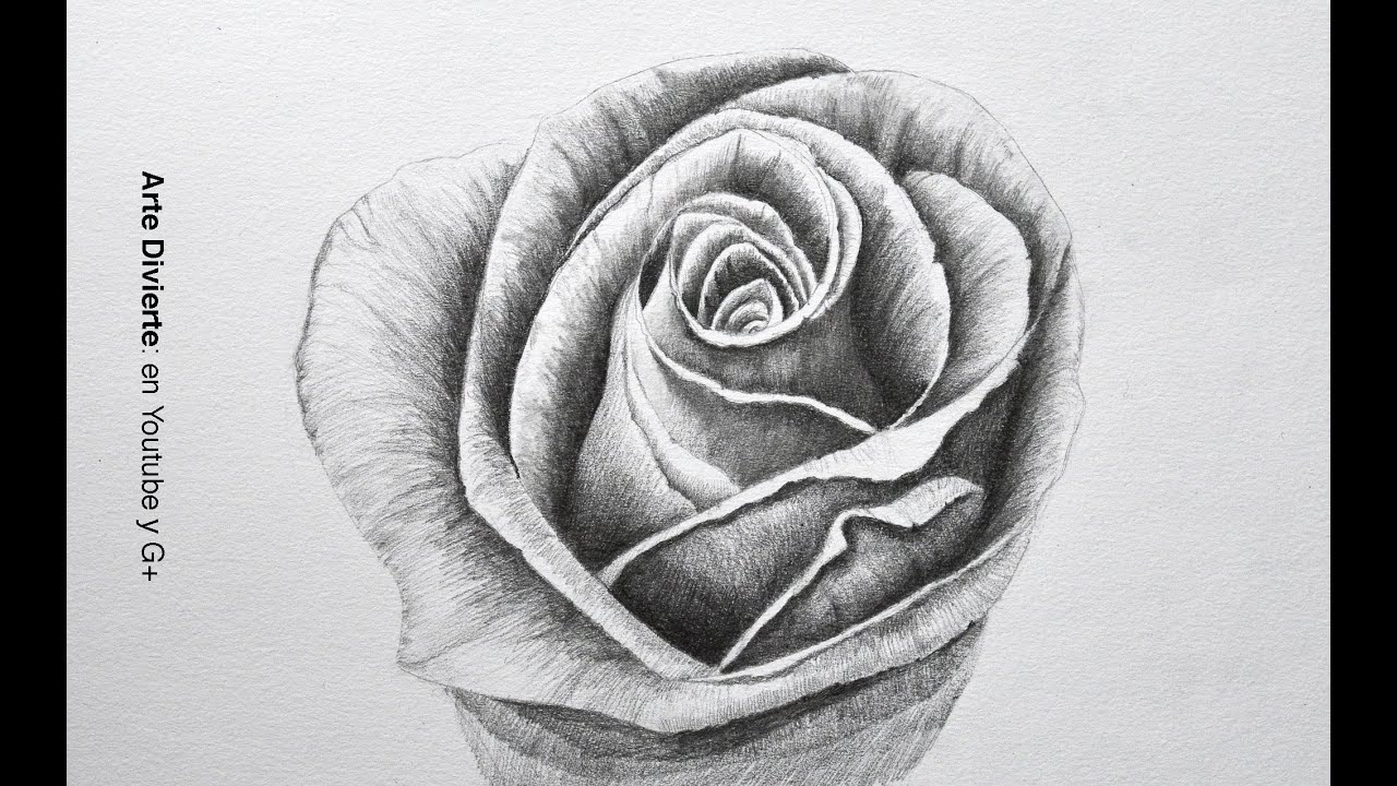 Arte Chicano Dibujos Drawing Flowers How To Draw A Rose With Pencil Step By Step Arte Divierte