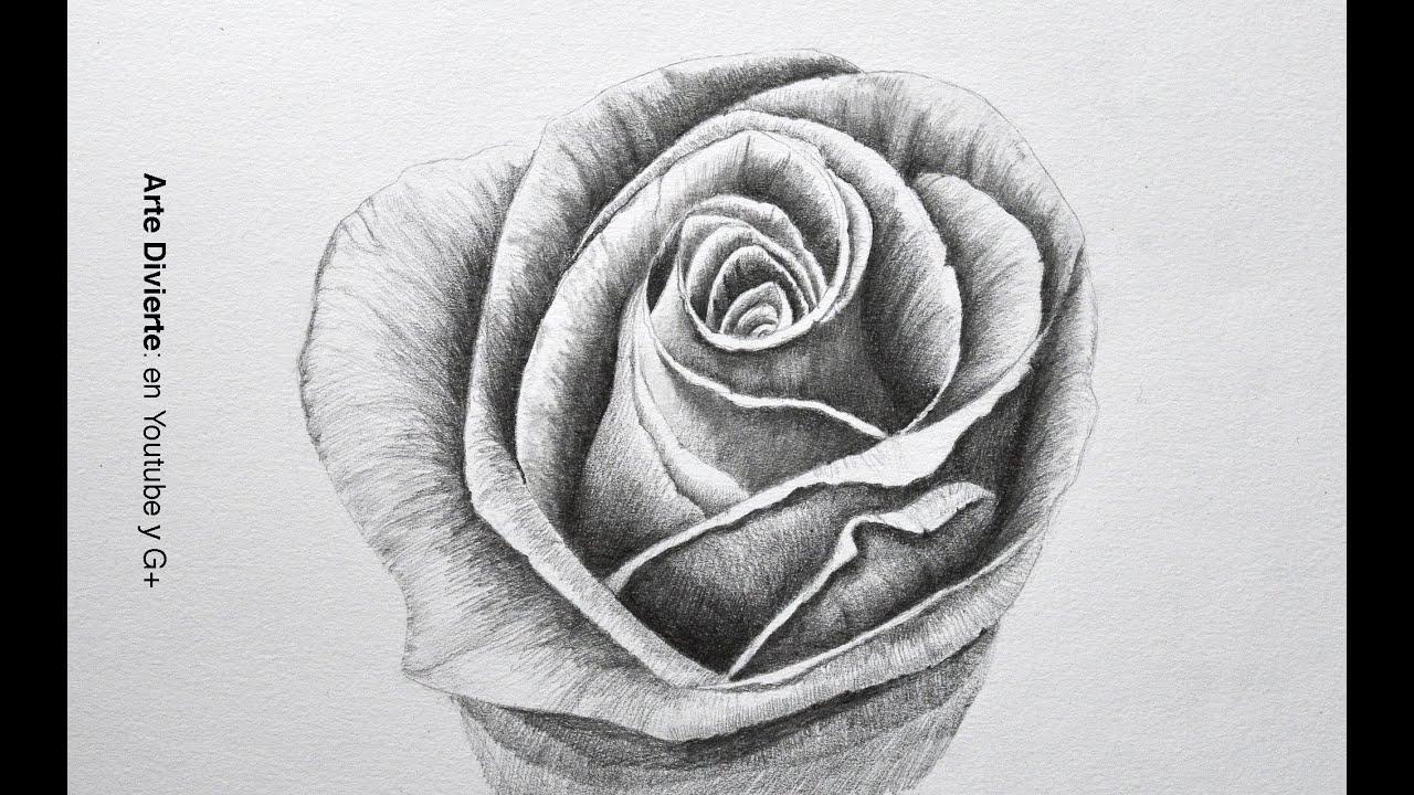 Dibujando flores: cómo dibujar una rosa a lápiz - paso a paso ...