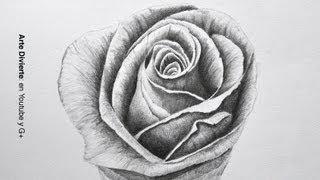 Cómo dibujar una rosa a lápiz