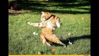Самые прикольные видео с котами для вашего отличного настроения!