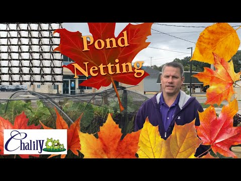 Fall netting of the pond is the most important task of the year.