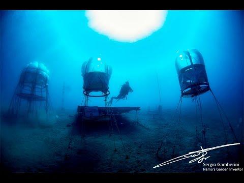Nemo's Garden - 3D movie