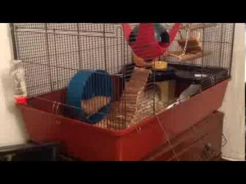 alaska hamster cage tour youtube. Black Bedroom Furniture Sets. Home Design Ideas