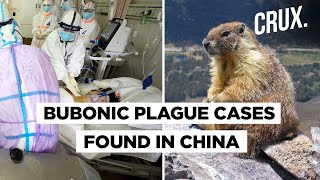 China Reports Suspected Cases Of Bubonic Plague That Can Kill An Adult In Less Than 24 Hours