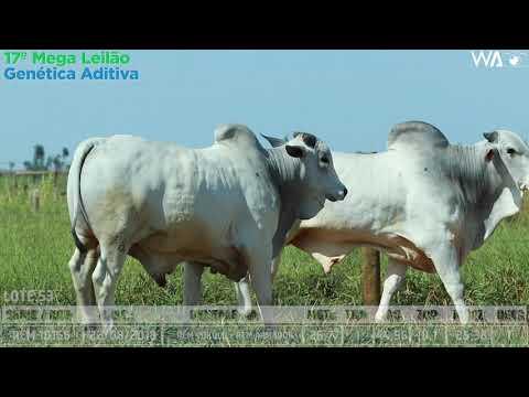 LOTE 53 - DUPLO - REM 10166, REMC A 2069 - 17º Mega Leilão Genética Aditiva 2020