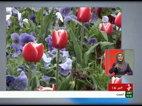 Iran Alborz province, Gachsar village Tulips garden باغ لاله هاي گچسر كرج ايران