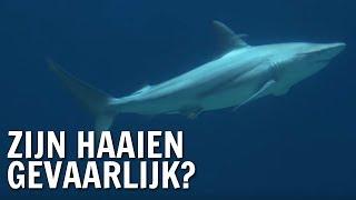 Zijn haaien gevaarlijk? | De Buitendienst over haaien