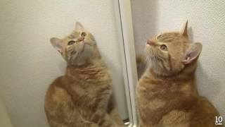 Коты и зеркало