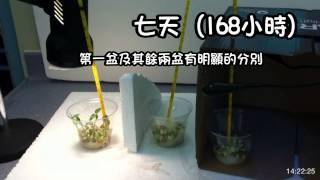 綠豆生長的條件_救世軍林拔中紀念學校_縮時攝影專題研習比賽2