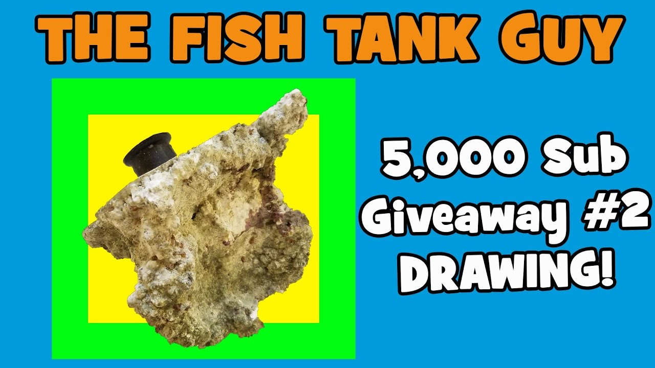 Fish tank kings a snorkelers dream - The Fish Tank Guy 5 000 Sub Giveaway 2 Drawing Again