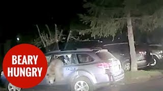 Bear becomes trapped in SUV after breaking in to munch on late night snacks