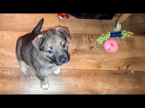 Вопрос: Может ли 3-месячный щенок подцепить инфекцию от дворовых кошек?