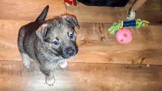 Спасение Новорожденный щенок чудом выжил И спустя 3 месяца Ищем дом и хозяина Новосибирск