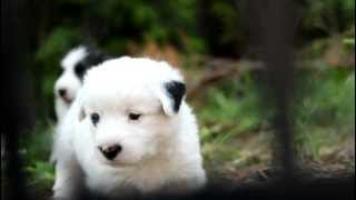 Is this a Panda Dog  ?