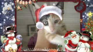 Mensagem de Natal - PAAR 2010 (Projeto Amigos dos Animais de Rua)