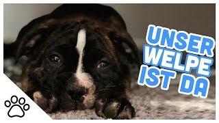 Unser Welpe zieht ein + Babybox-Unboxing // Kupferfuchs Dog-Vlog