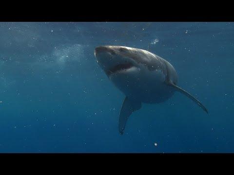 Blackmagic Cinema Camera Underwater Test (BMCC vs PMW200)