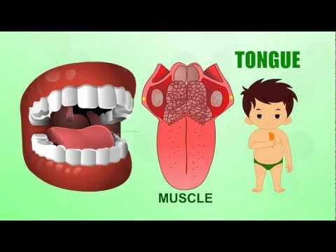 Tongue |  Human Body Parts | Pre School | Animated Videos For Kids