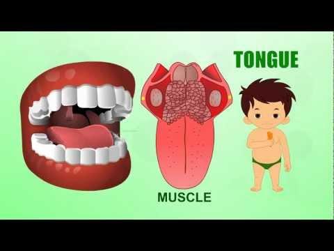 English Lessons for Kindergarten, Preschool ESL lessons