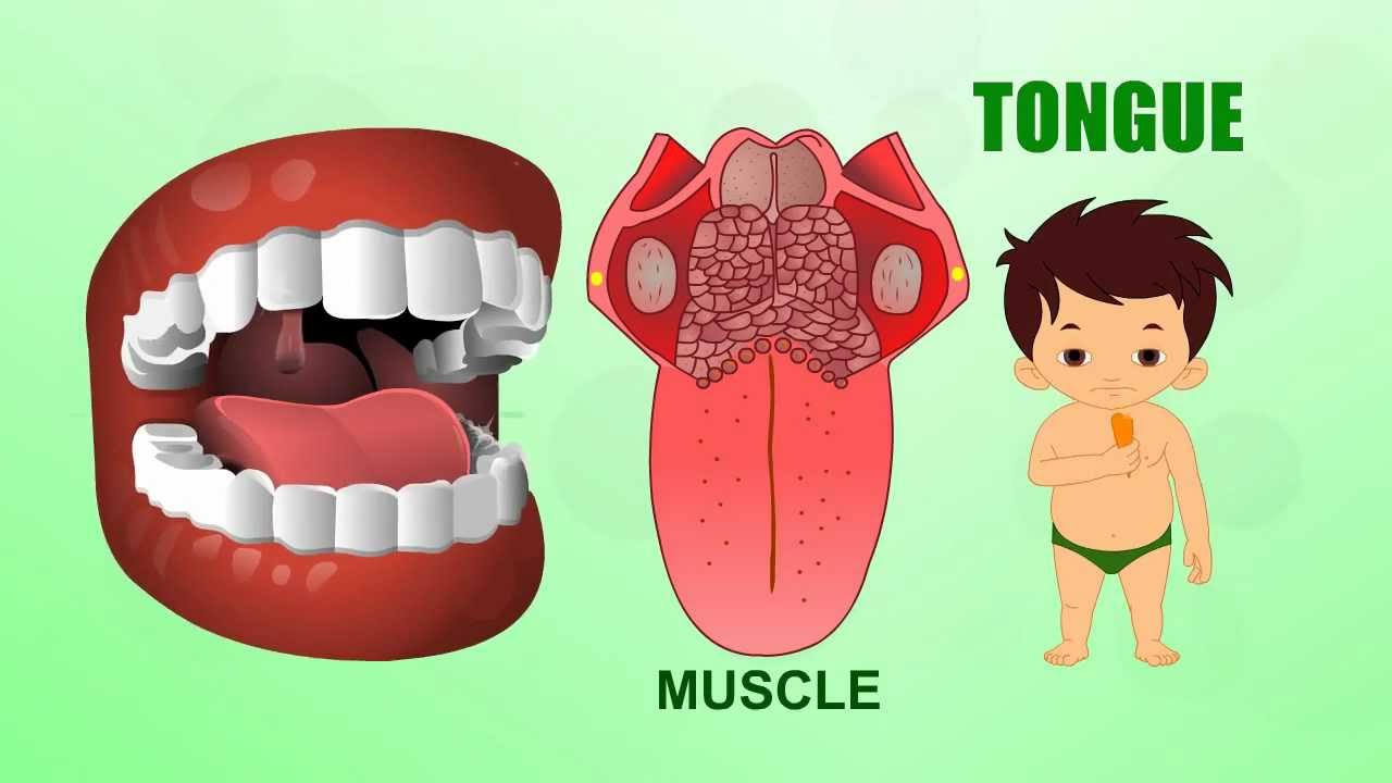 Tongue Human Body Parts Pre School Animated Videos For Kids