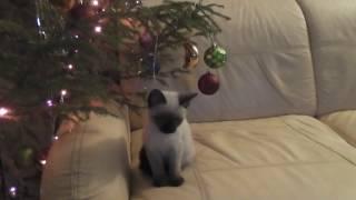 Первый Новый год Симки/The kitten's first New year