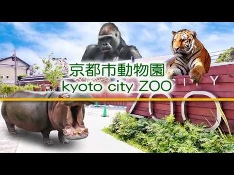 kyoto city Zoo 170805