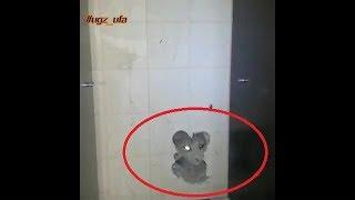 Операцию по спасению котенка сняли на видео в Уфе