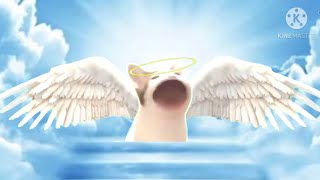 Pop Cat dies and goes to heaven