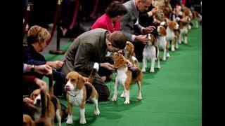 Выставка собак. Хендлинг.