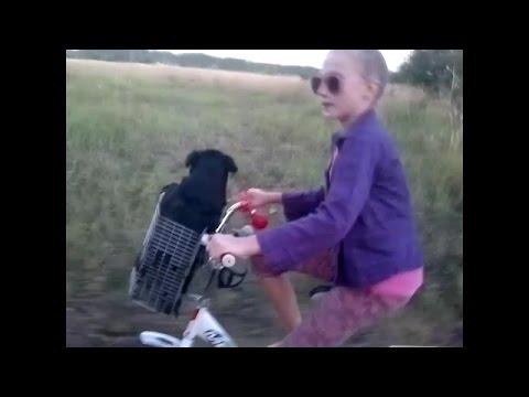 #Самодельная корзина на велосипед. # Катаем собачку в корзине #