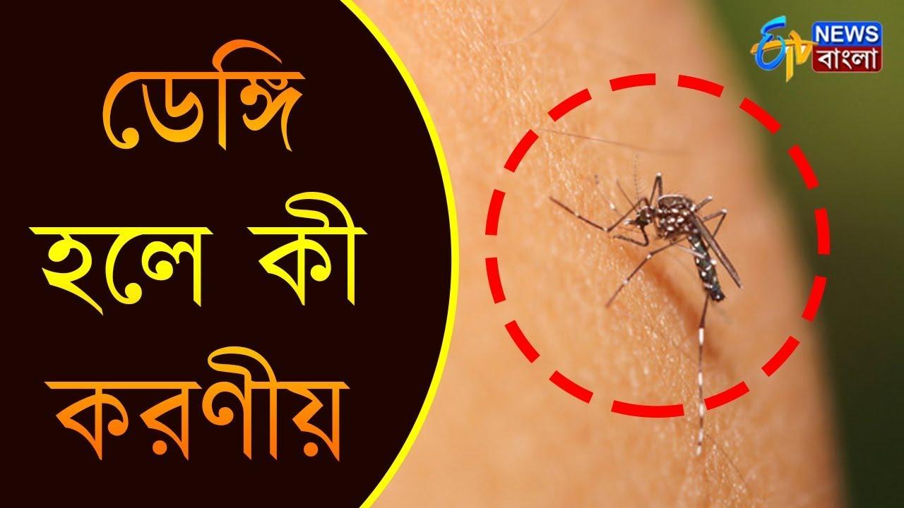 ডেঙ্গি হলে কী করণীয় | Latest Dengue News | ETV News Bangla