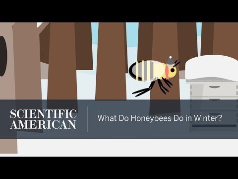 What Do Honeybees Do in Winter?