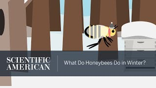 What Do Honeybees Do in Winter?