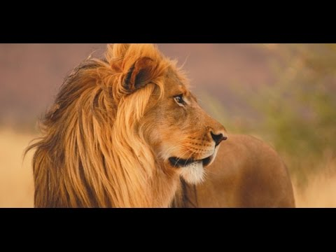 WildLife  AFRICA - Latest Documentary