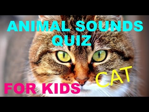 Kids Animal Quiz for Kids and Toddlers - Learning Quiz - What Sound - Animal Quiz - Quiz
