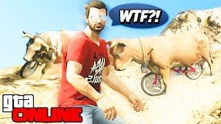 GTA 5 Online (PS4) - Коровы на велосипедах! #94(Мой интернет магазин - http://tags-keys.com ◅ Играем в GTA 5 Online (ГТА 5 Онлайн) на PS4. Коровы рассекают на горных великах..., 2015-03-03T10:28:21.000Z)