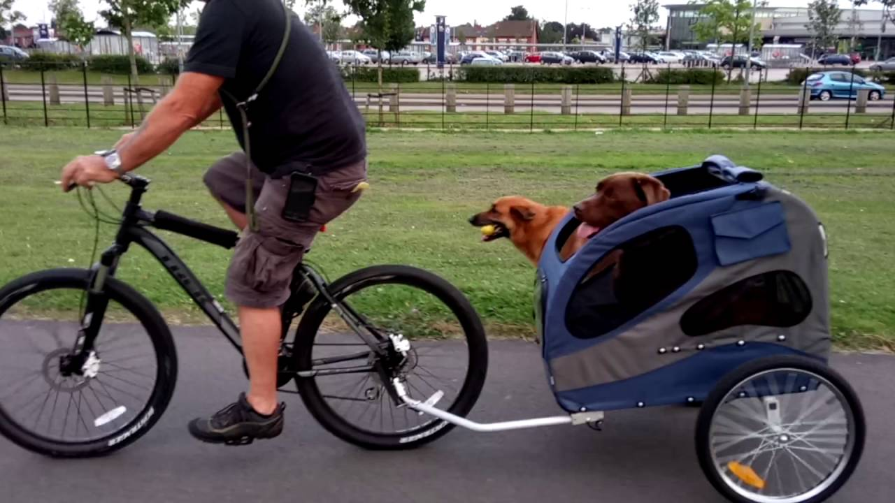 Dog bicycle trailer (Solvit Hound About II) first time ...