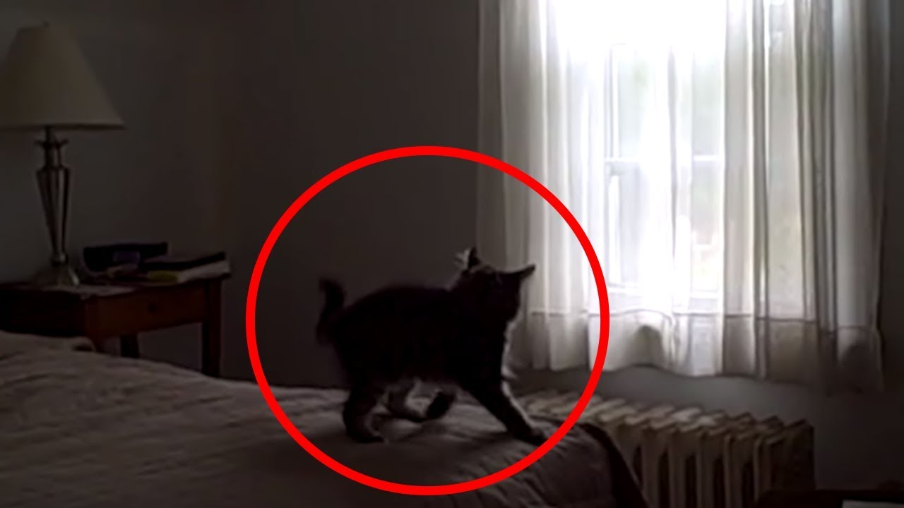 5-creepy-times-cats-were-seeing-things-their-owners-couldn-t