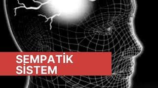 Otonom Sinir Sistemi, Sempatik Sistem